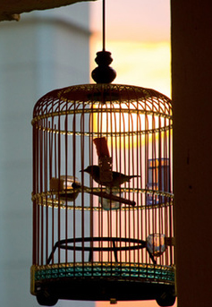 Caged Bird Products